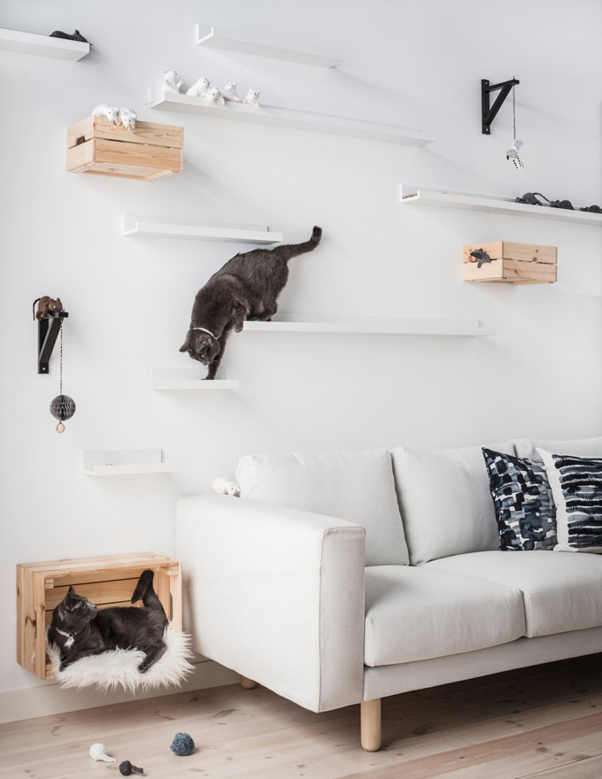 klattervagg for katter