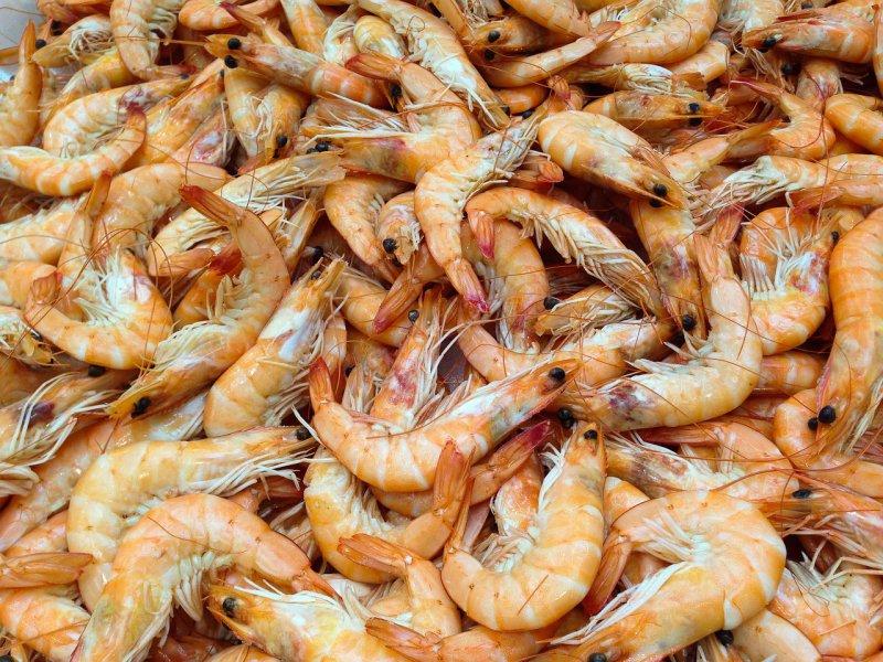 shrimp 727214 1280