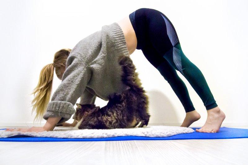 Yoga » Sevendays 8b77c137c883c