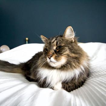 Nakenbilder av sam och katt sorry