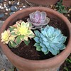 Newly planted succulents By Miss P2