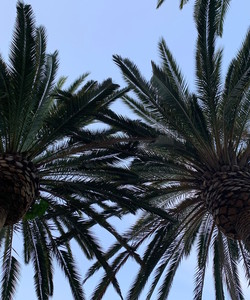 Palm Trees By Miss P