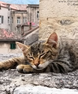 cat destinations kotor montenegro 5f2e50db9606ee374c46f763